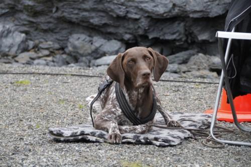 Effektiv hundetrening – arbeid og pauser