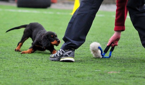 Effektiv hundetrening – belønninger som fungerer