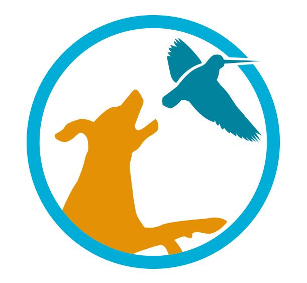 Vindfinn hundetrening